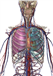 AATP 3 - Nervous, Pulmonary and Cardiovascular Systems - 603